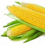 Кукуруза. История происхождения