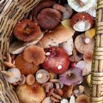 Лесные грибы, советы, хранение и приготовление