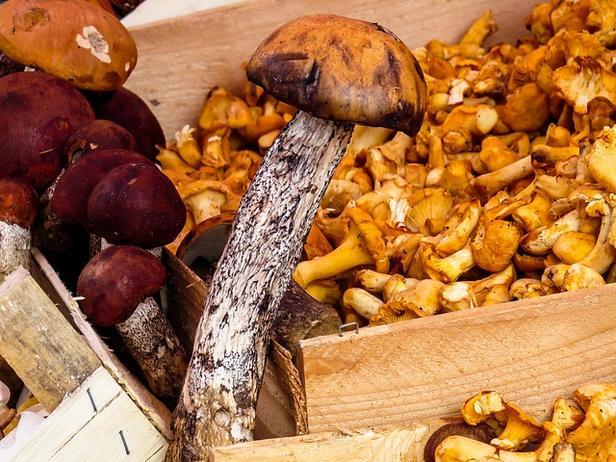 хранение лесных грибов