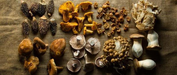 грибы сморчки лисички опята грузди