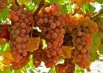 Мадера, виды вина, использование в кулинарии