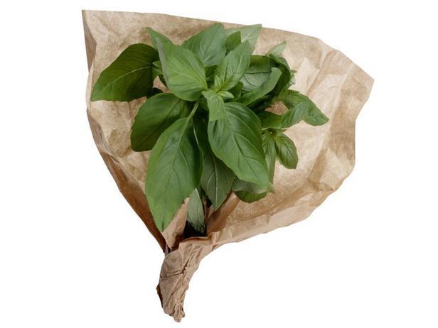 Базилик с его выраженным вкусом — классическое дополнение зеленых соусов песто и салатов капрезе