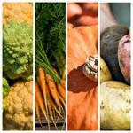 Рецепты из свежих осенних овощей